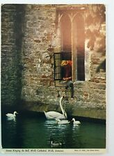 Swans Ringing the Bell Wells Cathedral Somerset Vintage Real Picture Postcard