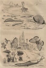 Lugworm.Argonaut (paper nautilus).Fritillary butterfly.Arion roundback slug 1834