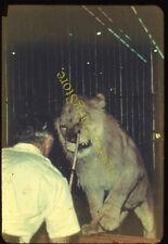 Paul Miller Circus Lion Tamer Performer 1950s 35mm Slide
