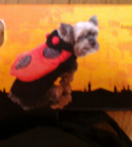 NWT Dog LADYBUG Hooded Costume Sz XXS Fits 6-8 Inches HALLOWEEN