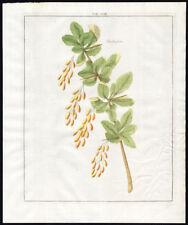 Antique Print-BERBERISSEN-BARBERRIES-ZUURBESSEN-Pomologia-Knoop-1758