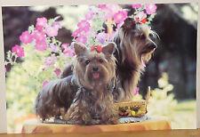(PRL) 1994 CANI CAGNOLINI PICCOLI CHIEN DOG VINTAGE AFFICHE ART PRINT POSTER