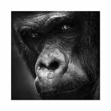 Warby Western Lowland Gorilla Face Close Up Photo Large Wall Art Print Square