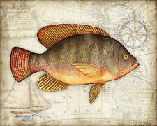 "Ocean Fish Art Print Titled ""Tilapia Map"" Signed by Dan Morris, Wall Art, 11x14"