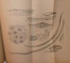 Biologia, Casati: Trichine e Trichinosi 1879 Forlì figure Pangenstecher 2a ed.