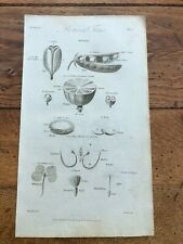 1812 elements of botany print - botanical terms ! plate 22