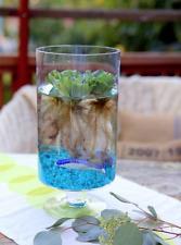 "Water Lettuce 2""-3""  ~{Large Natural Aquatic Bio Filter}~ 3 Plants"