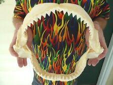 "(sj30-130) 13"" BULL SHARK jaw sharks jaws teeth taxidermy science ichthyology"