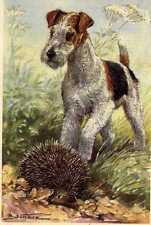 Wire Fox Terrier - Matted Dog Art Print - German / New U