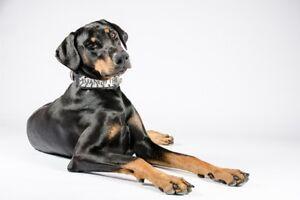 Bestia personalisiertes Lederhalsband für große Hunde. Handgefertigt in der EU!