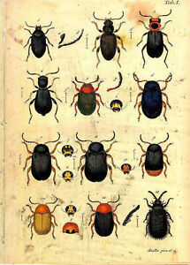Set of 2 x Natural History Prints 18th Century Insects Pictures Prints