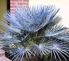 Trockene Halbschatten Pflanzen, Sämereien & Blumenzwiebeln mit Mittel