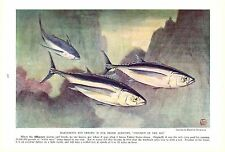 Vintage Scarce Hashime Murayama Fish Print ~ Albacore ~