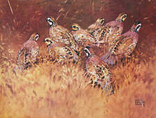 Bobwhite Quail Covey by Lynn Bogue Hunt