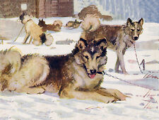 SIBERIAN HUSKY SLED DOG GROUP OF DOGS LOVELY GREETINGS NOTE CARD