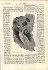 1894 Signora Duse Miss Lillian Alexander Singing Ballads