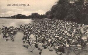 Vintage Postcard 1910's Scene Around Denton Maryland MD