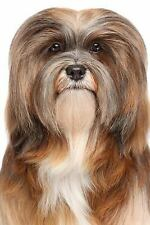 The Lhasa Apso Dog Journal : 150 Page Lined Notebook/diary by Dog Breeds.