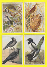 Overseas Issue Birds Collectable Trade Cards