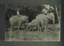 1911 Ceylon RPPC postcard Cover to Vietnam Elephants and Tamils