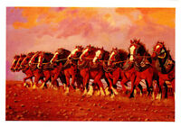 Greeting card of Twelve glorious Clydesdale horses in a row by PJ Hill