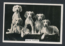 Saluki Puppies from series Dogs by Senior Service Cigarettes card #14