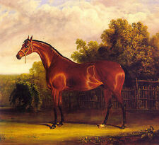 Dream-art Oil painting British artist Negotiator the Bay Horse in a Landscape