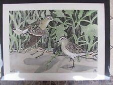 Original   Rex Brasher#241 Hand Colored Bird Print Baird Sandpiper  #241REX2 DSS