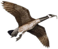 Jackite Canada Goose Decoy Kite / Windsock