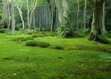 1 qm frisches Moos Moosplatten lebend Moosgarten Friedhof Garten Moosmatten