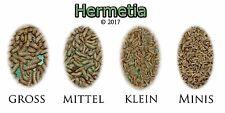 Hermetia (Soldatenfliege) groß 1kg, >3.000 Stk.