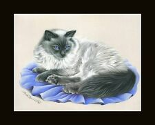 Ragdoll Cat Well Presented Print by I Garmashova