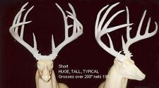 """UNFINISHED WHITETAIL REPLICA SCORES OVER 200"""" B&C ANTLER DEER ANTLERS TAXIDERMY"""