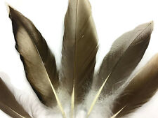 4 Pieces - Natural Barred Mallard Duck Flank Wing Feathers