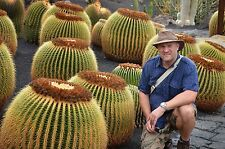 ECHINOCACTUS GRUSONII - GOLDEN BARREL CACTUS, 50 HIGH QUALITY SEEDS