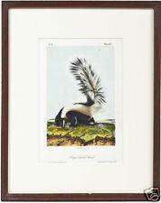 John Woodhouse Audubon (American, 1812-1862), Original Framed Skunk, circa 1846