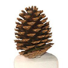 Pine Cones Hiding Place Nano