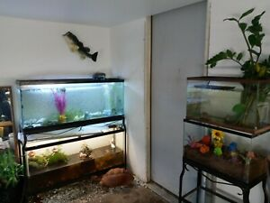 30+ Live Mystery Tadpoles Tree Frogs, Common Green, Toads, Pickerel and Peepers.