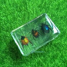 Three Little Beetle Specimens Cute Paperweight As Education Gift Small Block