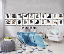 VLIES Fototapeten Fototapete Tapete Tier Tieren Katze Haus Hund 3FX10453VEPXL