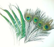 Mixed Peacock Eye Feathers and Peacock Sword Feathers - 10-12 inches. UK Stock