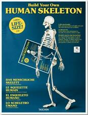 BUILD YOUR OWN LIFE-SIZE HUMAN SKELETON ~ ANATOMICAL LABELS ~ MOVING JOINTS