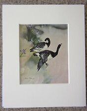 "Vernon Ward 8""x10"" Mounted Landscape & Birds Print - Barnacle Geese"