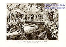 Berliner Zoo Aquarium XL Kunstdruck 1929 von R. Duschek Krokodil Hauptstadtzoo -