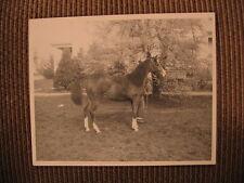 "Arabian Filly ""Starrdana"" of Jordan Arabian Farm Vintage 1958 Horse Photo"