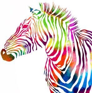 Malen nach Zahlen Zebra bunt 40x40 cm