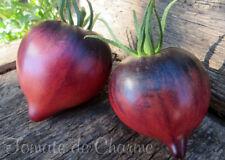 10 graines de tomate rare Sgt PEPPER'S attrayante antho heirloom tomato méth.bio