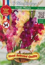 Holland Bulbs, Gladiolus Large Flowering Dayglo Mixture, 6 Bulbs