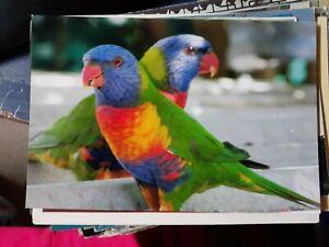 rainbow lorikeet photograph