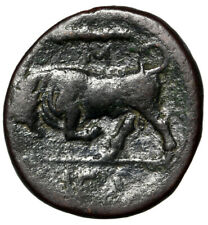 """Animal Greek Coin of Syracuse """"Large Bull Charging"""" Certified Authentic Coa Vf"""